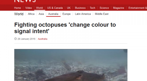 New Octopus Research by Peter Godfrey-Smith Featured on BBC, Guardian, & New Scientist